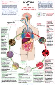 la médecine ayurvédique Mini_483921dhatus