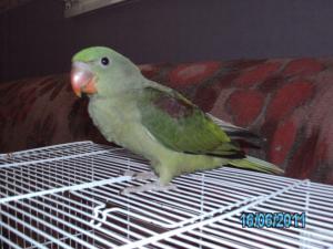 Mon bébé Grand alexandre Ruby !! Mini_489263PICT0231