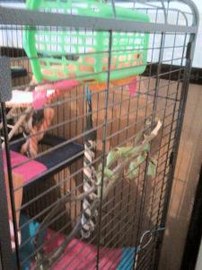 Aménagement nouvelle cage, besoin de vos avis Mini_517238DSC0149