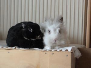 je vous presente Achille et Willow (cohanniversaire Achille p9) - Page 9 Mini_527265P1070941