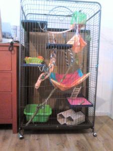 Aménagement nouvelle cage, besoin de vos avis Mini_545919DSC0138