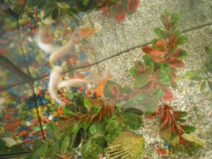 votre aquarium ou votre bassin Mini_560802IMGP0638