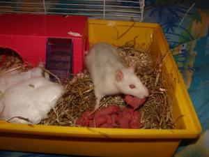 2 mamans husky et leurs lardons dans le 85 Mini_589898DSC03619