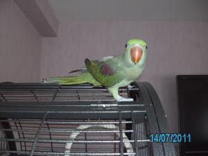 Mon bébé Grand alexandre Ruby !! - Page 2 Mini_593109PICT0368