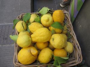 Citron  Mini_604402IMG5387