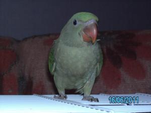 Mon bébé Grand alexandre Ruby !! Mini_626494PICT0233