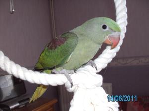 Mon bébé Grand alexandre Ruby !! Mini_631807PICT0224