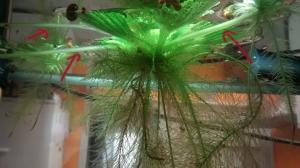 identification plante de surface Mini_650727IMG20140827171909527