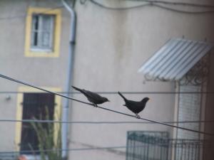 Les oiseaux de nos jardins Mini_700708DSCF2448JPG