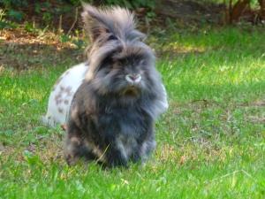 Nina, lapine bélier, née en aout 2011 - Page 7 Mini_722974P1140611