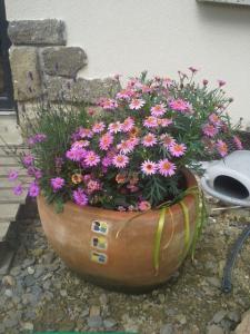 compos du printemps et clématite montana Mini_74672920140601125622