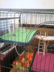Aménagement nouvelle cage, besoin de vos avis Mini_757713DSC0143