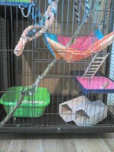 Aménagement nouvelle cage, besoin de vos avis Mini_769256DSC0139