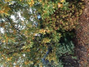 Apprendre à reconnaître les arbres Mini_786952934