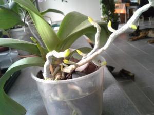 compos du printemps et clématite montana Mini_80578520140601125433