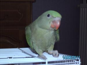 Mon bébé Grand alexandre Ruby !! Mini_826833PICT0221