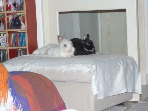 je vous presente Achille et Willow (cohanniversaire Achille p9) - Page 9 Mini_833191P1080243