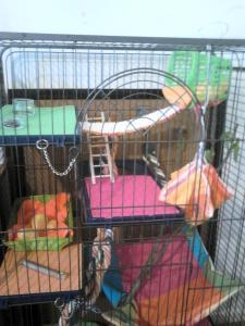 Aménagement nouvelle cage, besoin de vos avis Mini_838215DSC0141