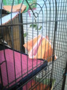 Aménagement nouvelle cage, besoin de vos avis Mini_841522DSC0144