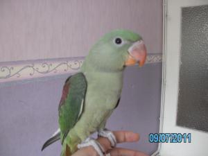 Mon bébé Grand alexandre Ruby !! - Page 2 Mini_883804PICT0357