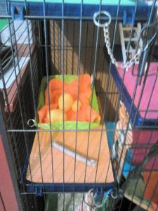 Aménagement nouvelle cage, besoin de vos avis Mini_889071DSC0148