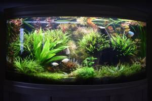 débutant (Mis en eau aquarium 260L) - Page 2 Mini_912549DSC0002FILEminimizer