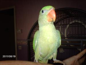 Mon bébé Grand alexandre Ruby !! - Page 3 Mini_947853IMAG0397