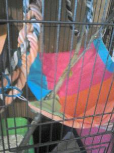Aménagement nouvelle cage, besoin de vos avis Mini_978731DSC0145