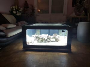 Mon aquarium de Toulouse. 360L Table basse Mini_98732720170412040855