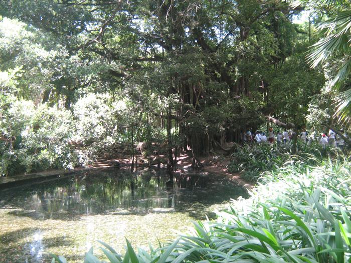 Le Jardin d'Essai du Hamma ... Un patrimoine exceptionnel 154142IMG_0510