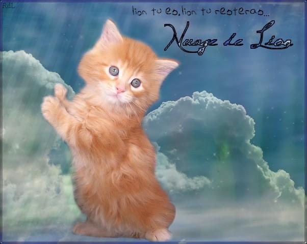 Petit Lion -> Nuage de Lion [REUSSI] 191954Nuage_de_Lion