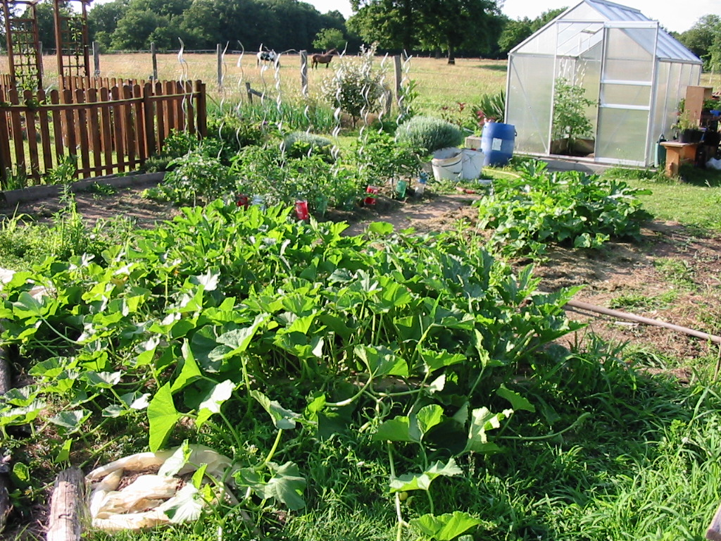 le jardin de jojo 199579113_1321_IMG