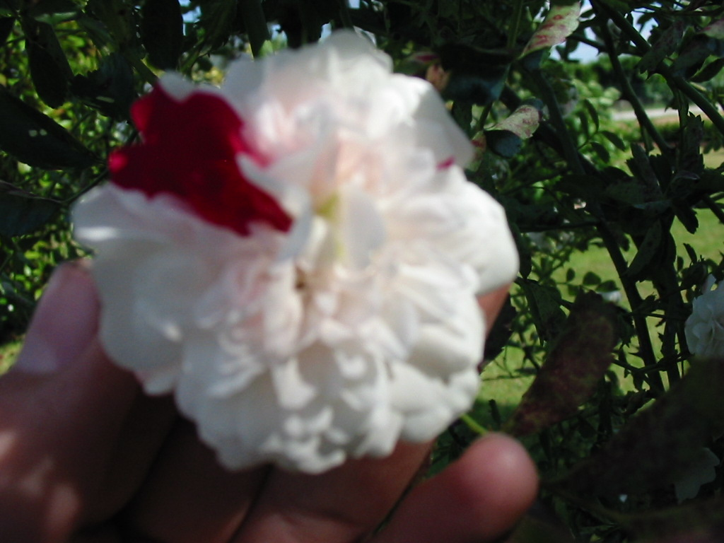 le jardin de jojo 362616113_1372_IMG