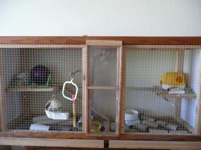 Vos cages : les photos [PAS DE COMMENTAIRES] - Page 3 368522cage