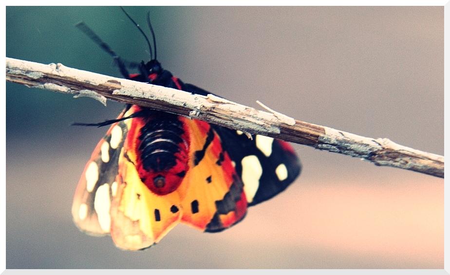 Papillon coloré 376902IMG_9034