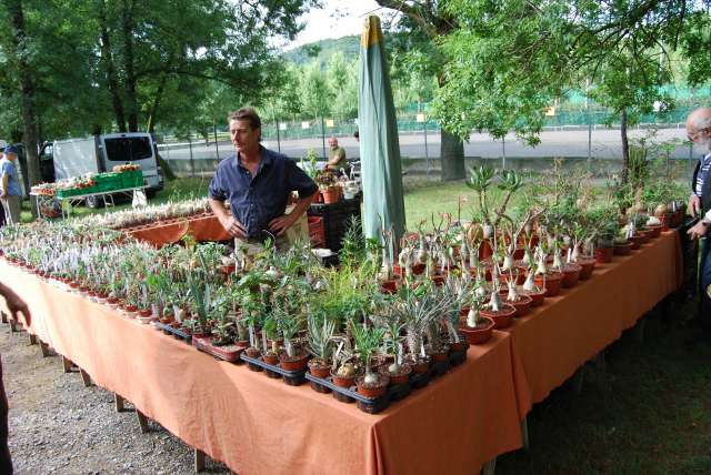 alba la romaine 2009 expo cactus et plantes rares 382915DSC_0016_PhotoRedukto