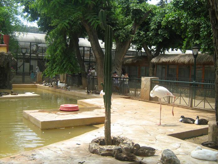 Le Jardin d'Essai du Hamma ... Un patrimoine exceptionnel 404165IMG_0406