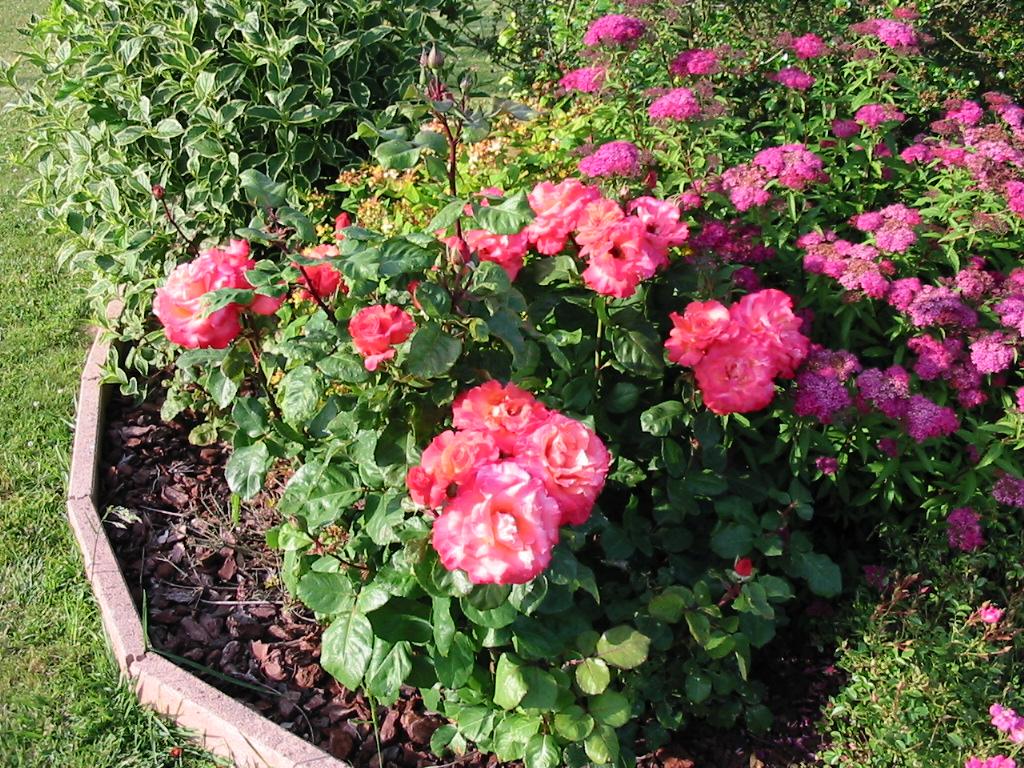 le jardin de jojo 421135113_1318_IMG