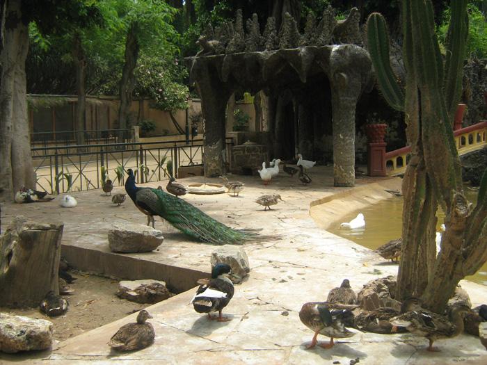 Le Jardin d'Essai du Hamma ... Un patrimoine exceptionnel 453907IMG_0408