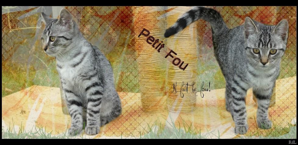 Petit Lion -> Nuage de Lion [REUSSI] 467607Petifou