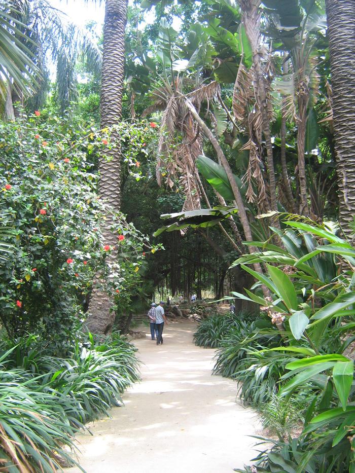Le Jardin d'Essai du Hamma ... Un patrimoine exceptionnel 482739IMG_0501