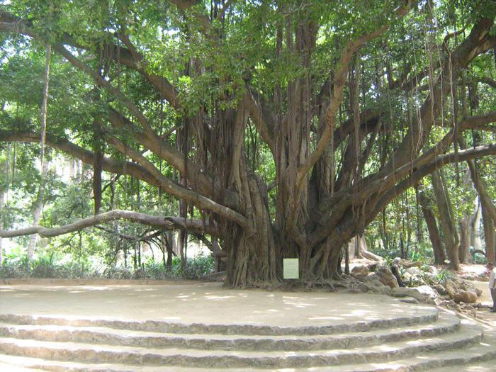 Le Jardin d'Essai du Hamma ... Un patrimoine exceptionnel 483270IMG_0505