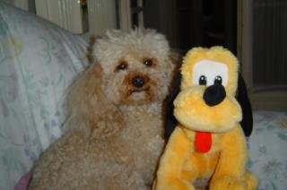 Ici venez remplir la fiche d'identité de votre chien avec sa photo à la suite des autres chiens du forum 520300dsc02493