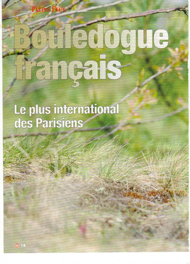 Bouledogue Français 52384929_04_2009_16_33_20