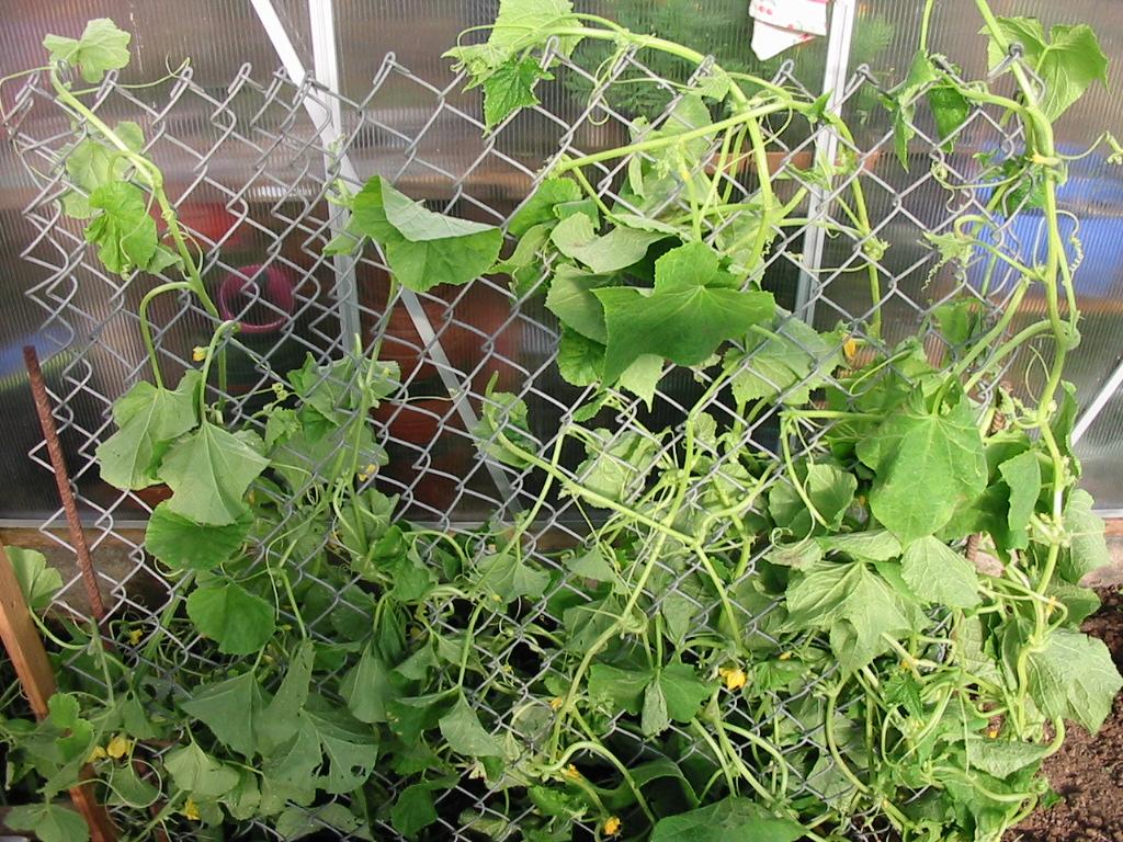 le jardin de jojo 553186113_1330_IMG