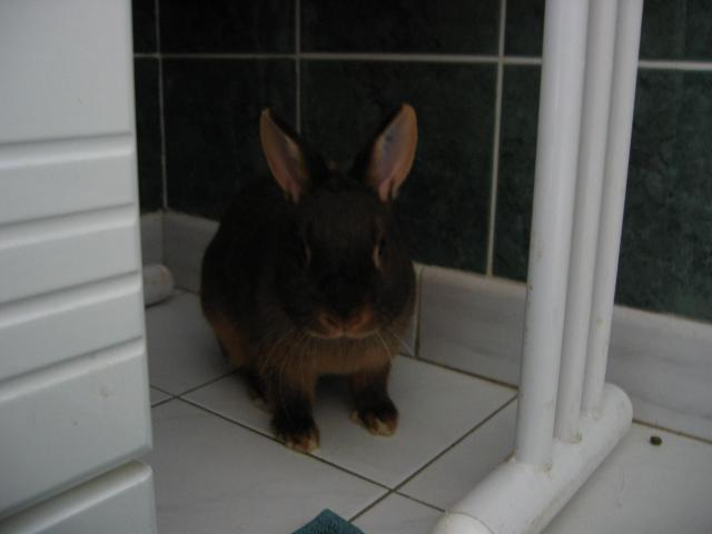 La dure vie de mes lapines ! 595643Amaranthe