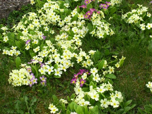 Le printemps au jardin 726952100_0416