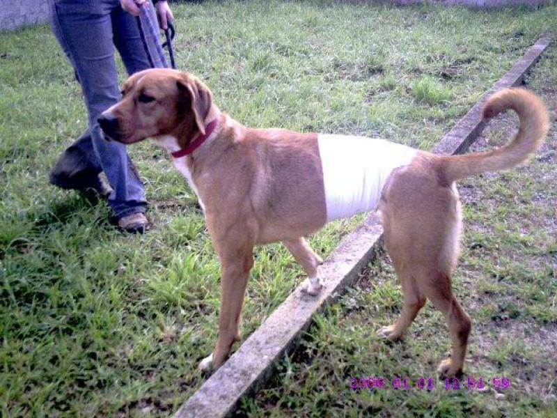 Laya, croisé boxer, 3 ans, refuge recanoz (39) 768054dhhthyt