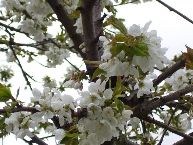 Le printemps au jardin 89682100_0415