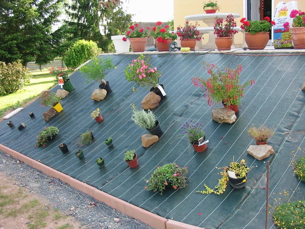 le jardin de jojo 930674113_1315_IMG